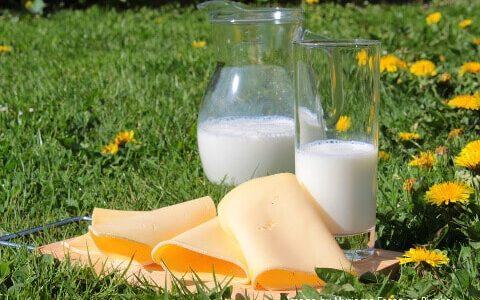 Milch gesund oder ungesund